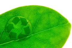 Beautiful water drop on a leaf shoot and recycle logo. In macro lens Stock Images