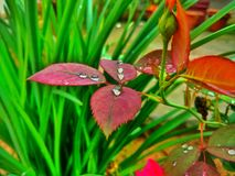Water Drop and leaf royalty free stock image