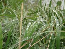 Beautiful water drops on grass in the french alps mountain. Beautiful water drops on grass in the french alps mountain laying on the ground Stock Photo