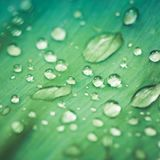 Beautiful water drops on a green leaf Royalty Free Stock Photos