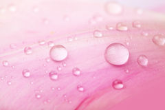 Beautiful water drops on pink petals Royalty Free Stock Photos