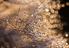 Beautiful water drops Royalty Free Stock Photography