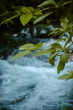Water flow. Beautiful water flow with foreground leaf Royalty Free Stock Image
