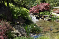 Beautiful water garden with a waterfall and waterside plants. Royalty Free Stock Images