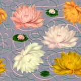 Water Lilies on a Gray Background stock photos