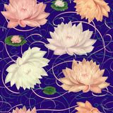 Water Lilies on a Violet Background stock photos