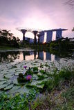 Beautiful Water Lotus Flower Marina Bay Sunset Royalty Free Stock Images