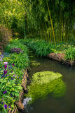 Beautiful water path along bamboo forest. Water flowing in man made channel inside bamboo forest Royalty Free Stock Photo