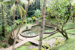 Beautiful water pond with lilles in tropical country. Tropical view/park with lillies. Will you visit tropical country next year Royalty Free Stock Image