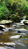 Beautiful water spring in forest Stock Photography