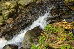 Beautiful water stream flowing through rocks, grass and small yellow flowers. In a wild forestn Royalty Free Stock Image