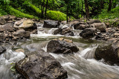 Water stream with trees Royalty Free Stock Images