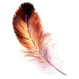 Beautiful watercolor bird feather isolated Stock Images
