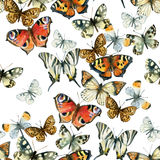 Beautiful watercolor butterflies seamless pattern Stock Photos