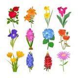 Beautiful watercolor flower botanical bloom painting handmade summer branch petal decoration bouquet nature design Stock Photography