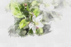 Beautiful watercolor flower. Illustration Spring. royalty free illustration