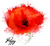 Beautiful watercolor flower poppy drawing. Royalty Free Stock Image