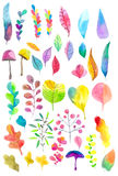 Beautiful Watercolor flower set Stock Image