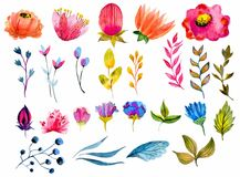 Beautiful Watercolor flower set Stock Photos
