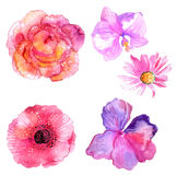 Beautiful Watercolor flower set. Over white background for design Royalty Free Stock Photos