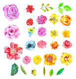 Beautiful Watercolor flower set Stock Photography