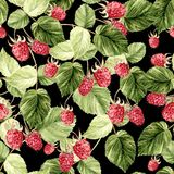 Beautiful Watercolor Raspberry Seamless Pattern. Stock Images