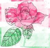 Beautiful watercolor rose. Hand drawn card. Royalty Free Stock Photos