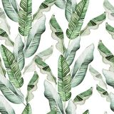 Beautiful watercolor seamless pattern with tropical leaves and banana leaves. Illustration royalty free stock photography