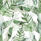 Beautiful watercolor seamless pattern with tropical leaves and banana leaves. Illustration stock image