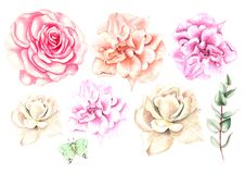 Beautiful Watercolor set with different roses. Royalty Free Stock Photo