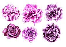 Beautiful watercolor set with flowers rose Royalty Free Stock Photography
