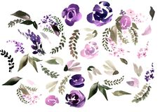 Beautiful watercolor set with rose, peony flowers and leaves. Royalty Free Stock Images