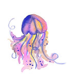 Beautiful watercolor vibrant picture of a floating jellyfish Stock Photography