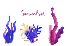 Beautiful watercolor vibrant set of underwater seaweed Royalty Free Stock Photography