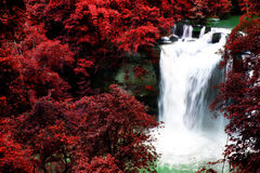 Free Beautiful Waterfall Royalty Free Stock Photography - 21285707