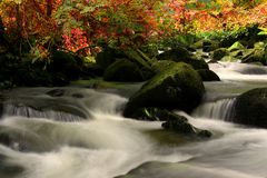 The beautiful waterfall. Small waterfall in the woods Stock Photos