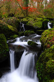 The beautiful waterfall. Small waterfall in the wood Stock Photography