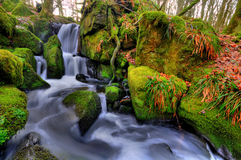 The beautiful waterfall. Small waterfall in the wood Royalty Free Stock Photography