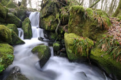 The beautiful waterfall. Small waterfall in the wood at morning Stock Photos