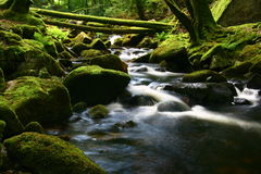 The beautiful waterfall. Small waterfall in the wood Royalty Free Stock Image