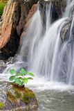 Beautiful waterfall. With plants at the bottom Stock Images