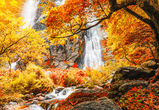 Beautiful waterfall in autumn forest with red and yellow leaves Stock Image