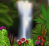 Beautiful on the waterfall background Royalty Free Stock Image