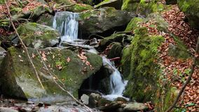 Beautiful waterfall comes out of a huge rock in th. Incredibly beautiful and clean little waterfall with several cascades over large stones in the forest comes stock video