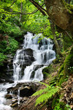 Beautiful waterfall in the forest with ferns Royalty Free Stock Image