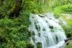 Beautiful waterfall and forest. Royalty Free Stock Photos