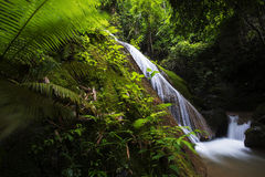 Beautiful waterfall in the Forest Royalty Free Stock Photo