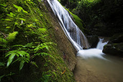 Beautiful waterfall in the Forest Royalty Free Stock Image