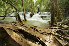 Beautiful waterfall in green forest Royalty Free Stock Photography