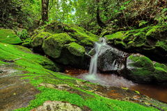 Beautiful waterfall in green forest in jungle at Phu Soi Dao mou Stock Photography